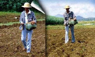 II 3 Direct seeding