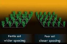 factors that affect soil fertility