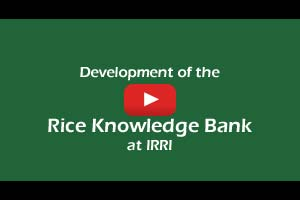 Development of the Rice Knowledge Bank at IRRI