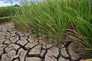 climate-change-ready-drought-tolerant