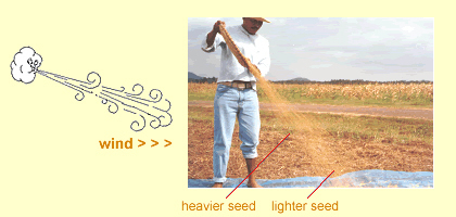 using-goodseed winnowing