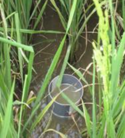 factsheet-watermgt-awd-tube-submerged