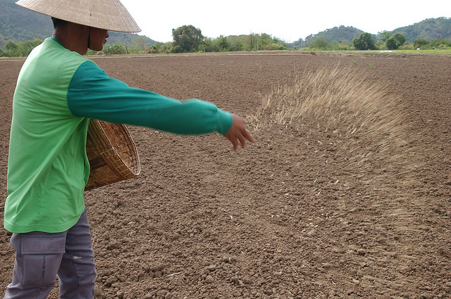 Image result for dry seeding IRRI