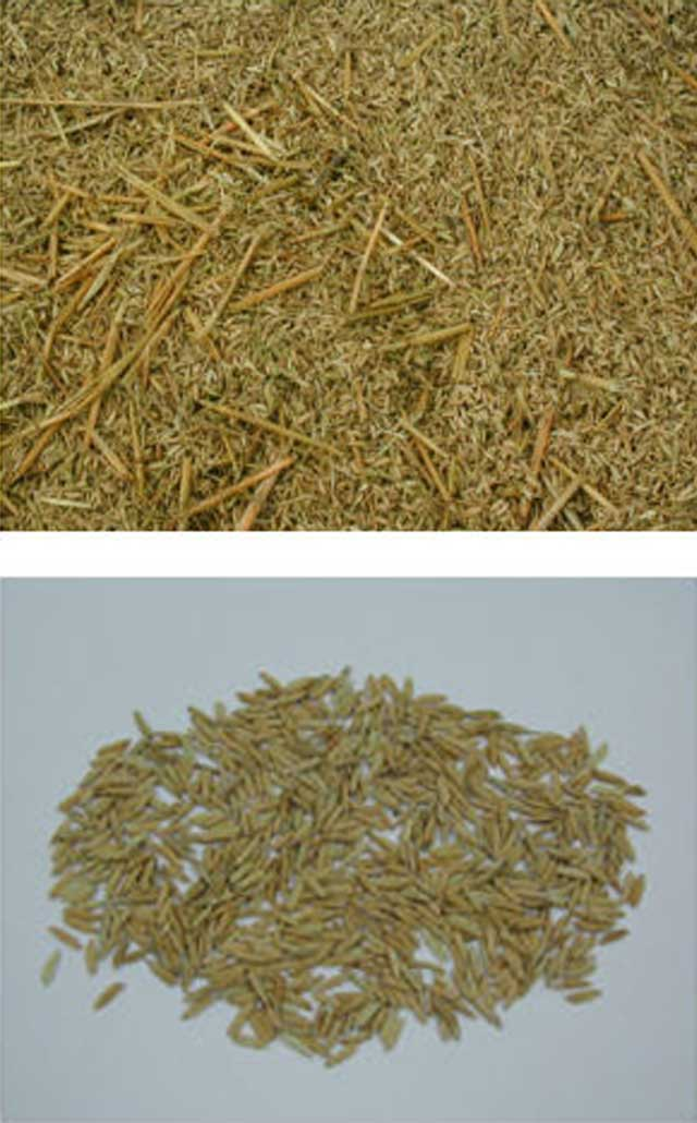 postharvest-pre-clean-paddy