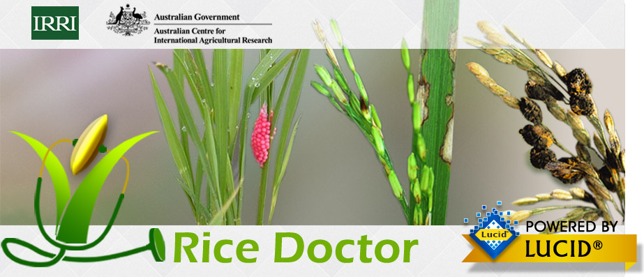Rice Doctor Irri Rice Knowledge Bank