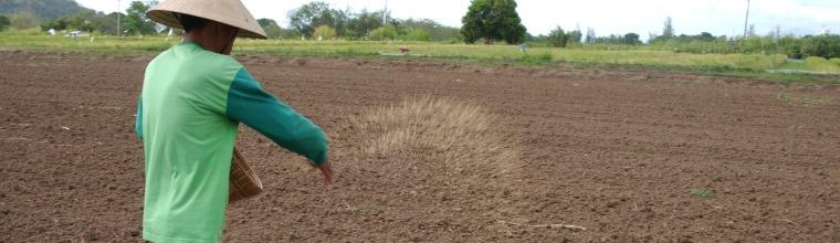 Direct seeding