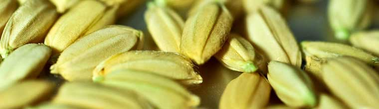 How to produce good seed