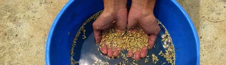 How to treat seeds