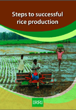 Steps to successful rice production