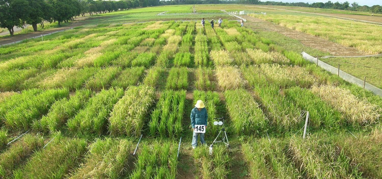 4 3 Drought Tolerance Screening Methods