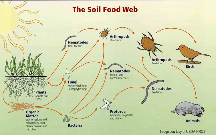 Module 2 submergence and soil biology for Soil 7 days to die